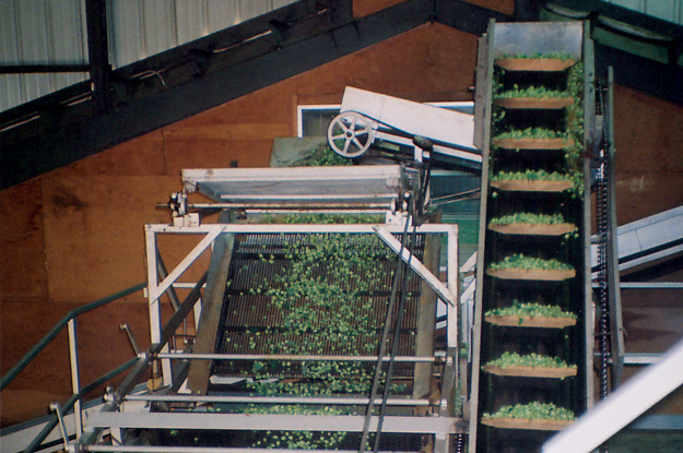 Hops on Dribble Belt