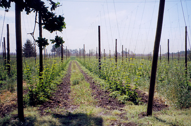 Young Plants in mid-May